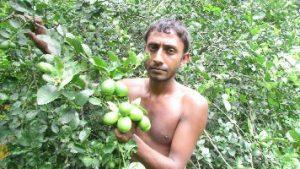 Lemon farmer 300x169 লেবু চাষে নতুন আশার সঞ্চার করেছেন নকলার মনিরুজ্জামান