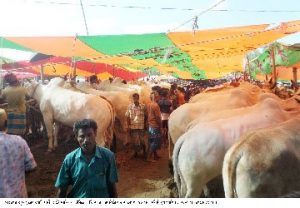 Tangail cow hat25.08.2017 300x208 সরকার বঞ্চিত হচ্ছে রাজস্ব থেকে ভূঞাপুরের গোবিন্দাসী গরুর হাট স্থায়ী ইজারার অভাবে ঐতিহ্য হারাচ্ছে